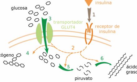 Patentes de metabolitos