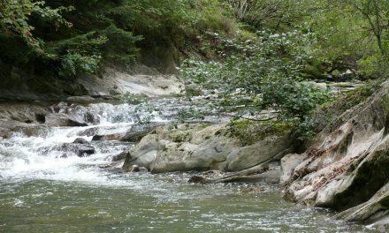 Caso: la liquidación de la compañía de agua mineral